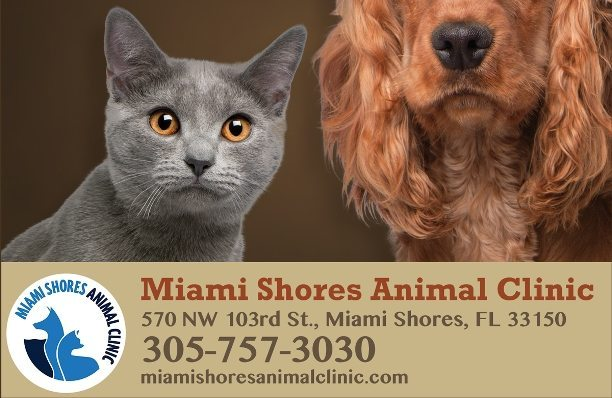 Animal-Clinic_620x420